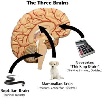 the three brains